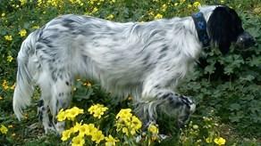 Χάθηκε σκυλάκι στο Άνω Μάννα