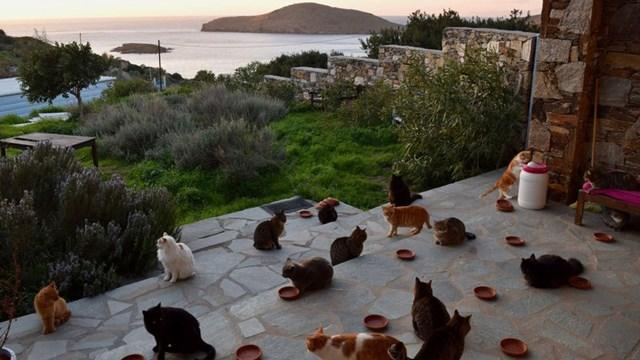 Κέρδισε χρήματα φροντίζοντας 55 γάτες