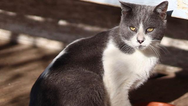 Βρέθηκε γάτος στο Δελφίνι