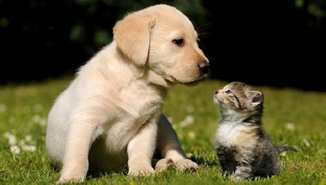 Νομοσχέδιο για ζώα συντροφιάς: Αυστηρές ποινές με πρόστιμα έως 50.000 ευρώ και κάθειρξη έως 10 έτη για κακοποίηση