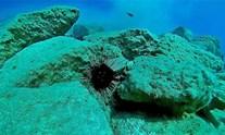 Ελλάδα: Προσοχή στον «εισβολέα» δηλητηριώδη αχινό