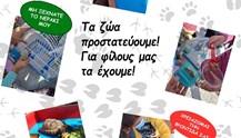 ΔΕΛΑΣΑΛ Σύρου: Υλοποίηση δράσεων με αφορμή την Παγκόσμια Ημέρα των Ζώων