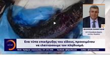 Σε συναγερμό για την αύξηση του λαγοκέφαλου, οι αρχές στο Νότιο Αιγαίο