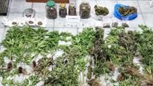 Σύλληψη στη Σαντορίνη για καλλιέργεια και διακίνηση ναρκωτικών