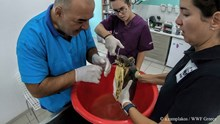 Περίθαλψη τραυματισμένης θαλάσσιας χελώνας στη Σύρο