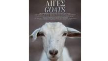 Goats go to Kriari